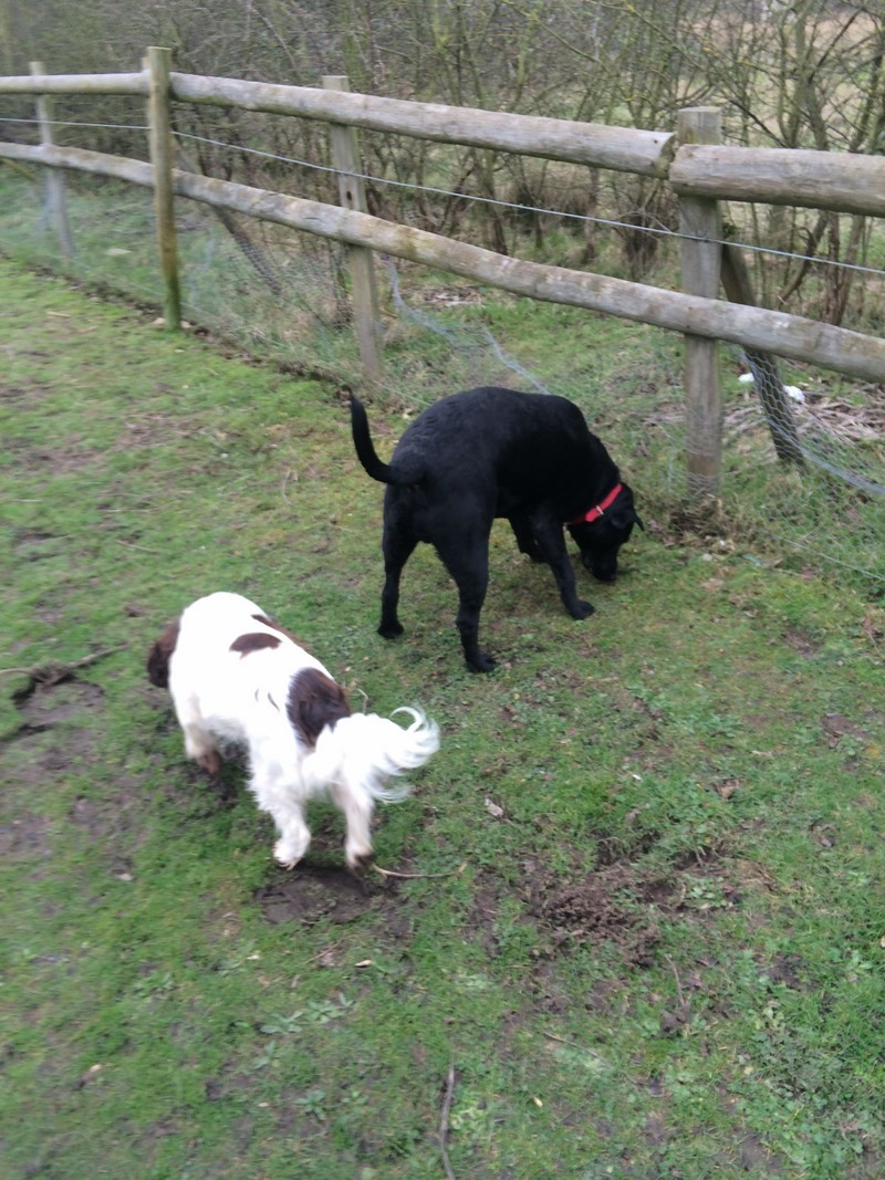 Dog Home Boarding Essex
